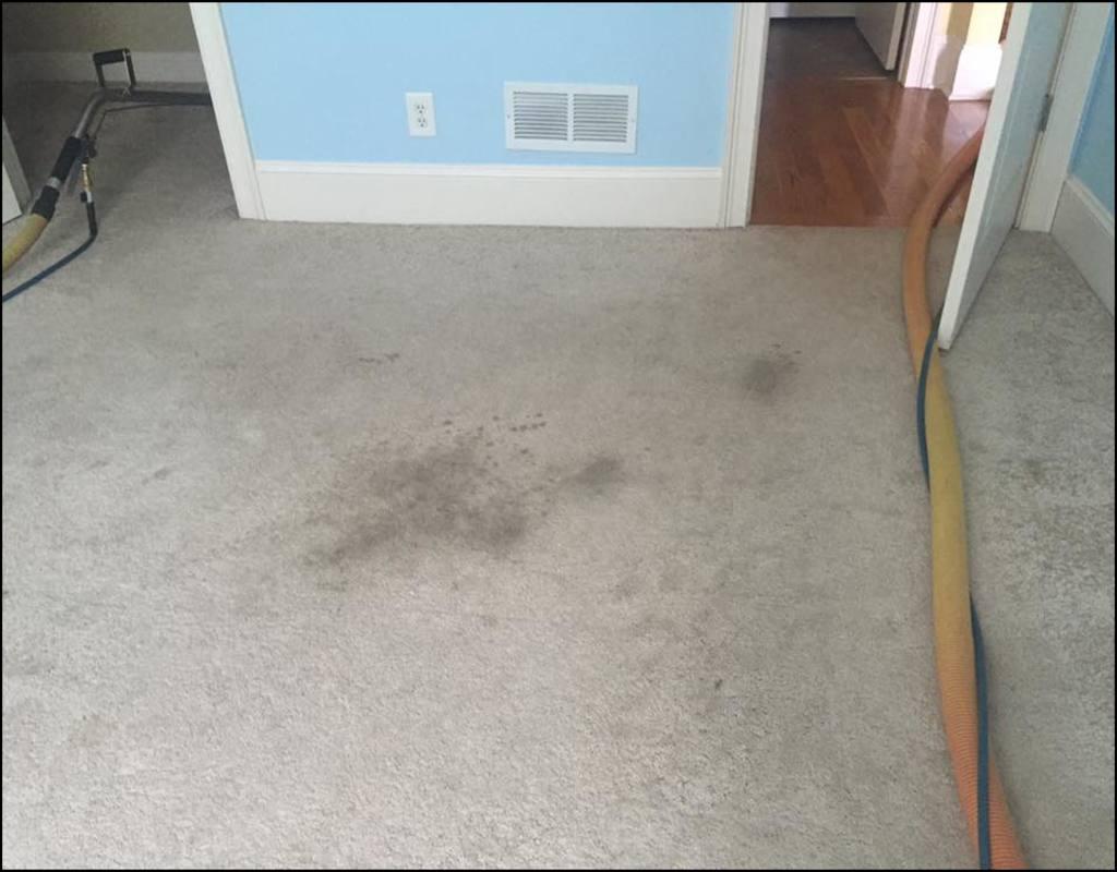 athens-ga-carpet-cleaning Athens Ga Carpet Cleaning