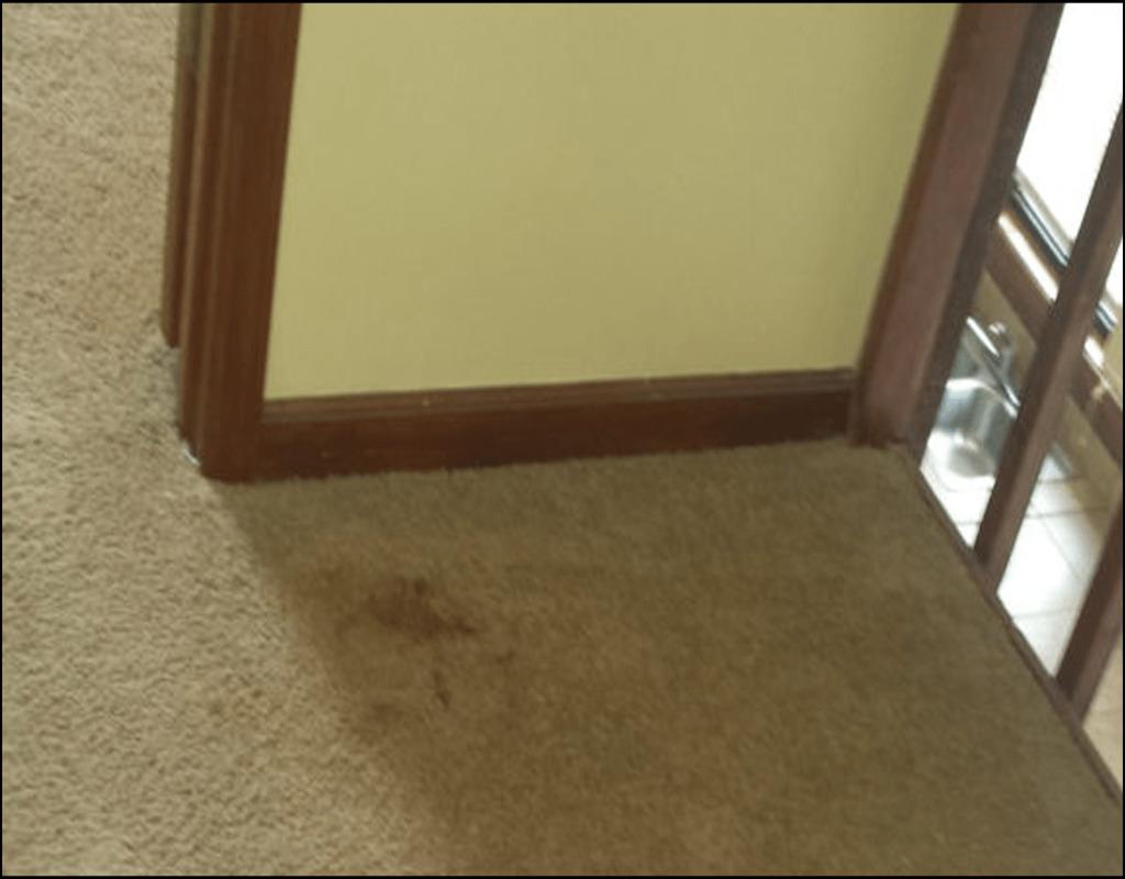 carpet-cleaning-acworth-ga Introducing Carpet Cleaning Acworth Ga
