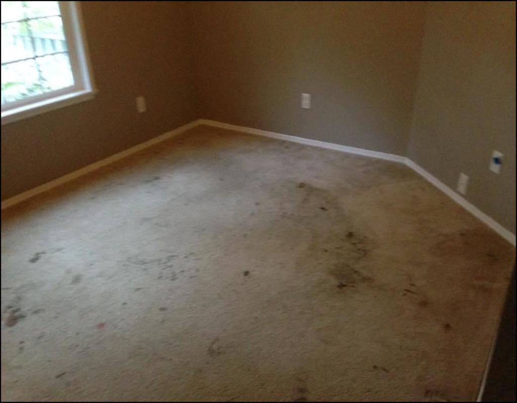 carpet-cleaning-jackson-tn Carpet Cleaning Jackson Tn