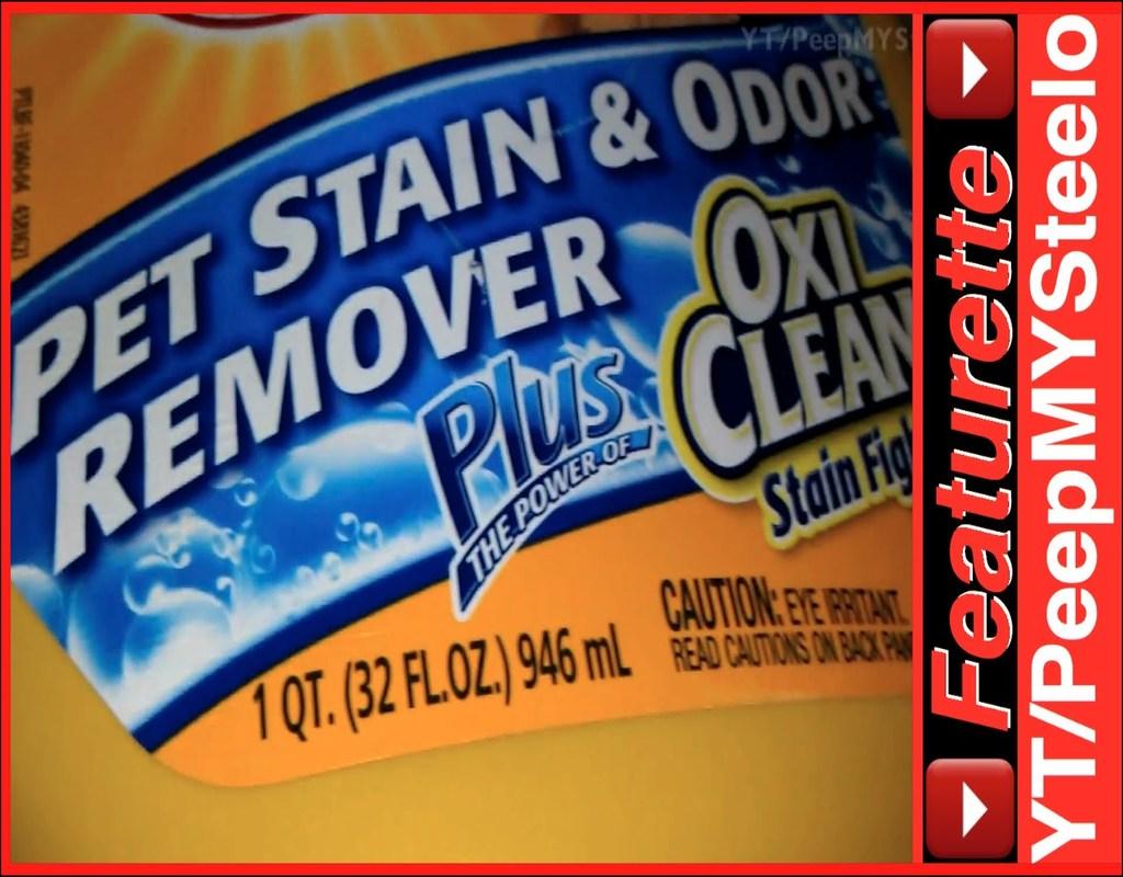 the-best-carpet-shampoo-for-dog-urine A Review of The Best Carpet Shampoo For Dog Urine