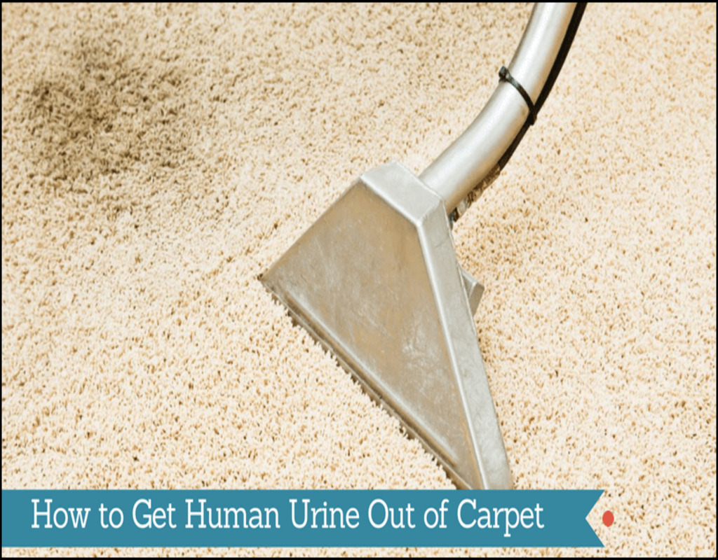 getting-human-urine-smell-out-of-carpet Getting Human Urine Smell Out Of Carpet