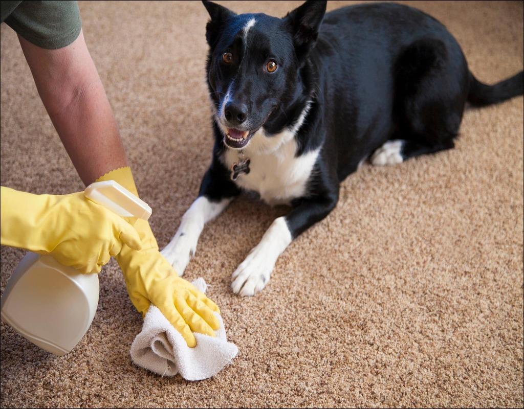 Neutralize Dog Urine On Carpet