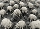 What Kills Dust Mites In Carpet