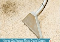 Getting Human Urine Smell Out Of Carpet