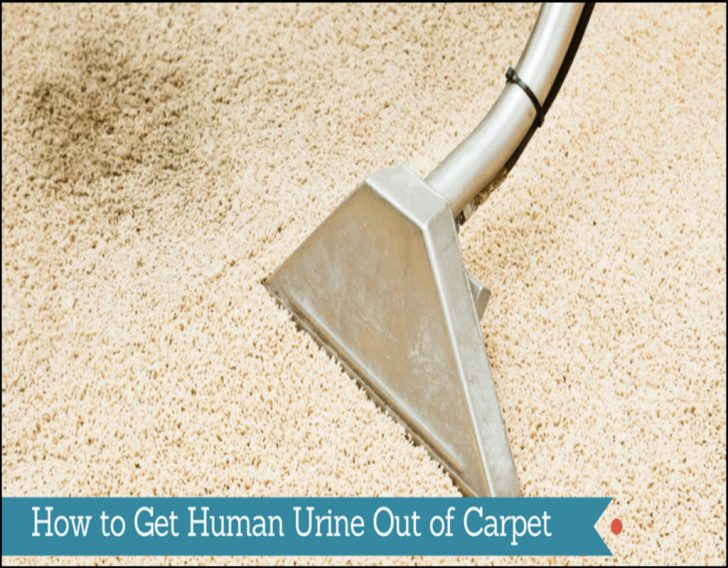 Permalink to Getting Human Urine Smell Out Of Carpet