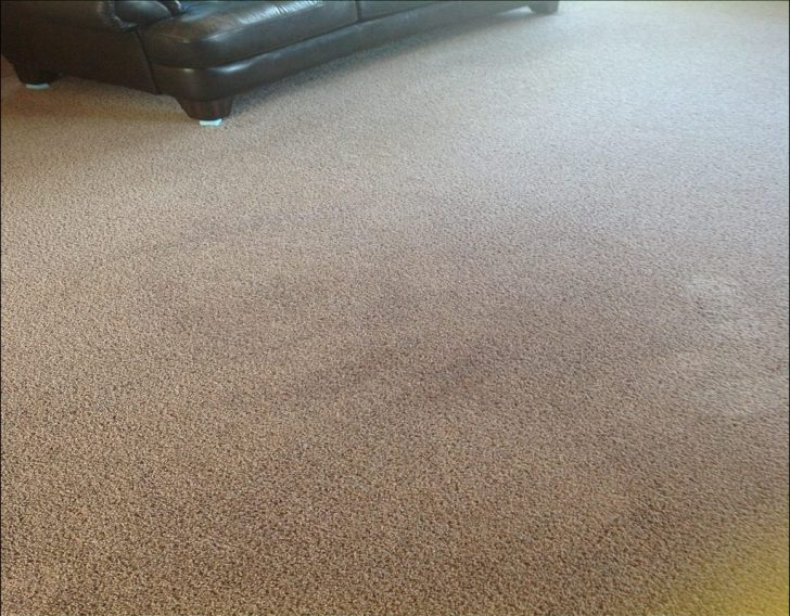 Permalink to Top Guide of Mohawk Aladdin Carpet Reviews